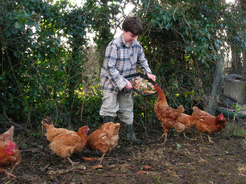 School children can learn from direct experience what its like to look after farm animals with the planned free range chicken area.