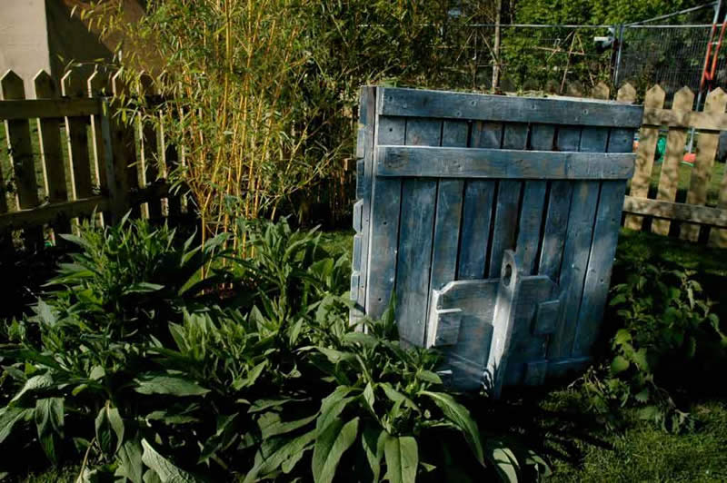 Triangular compost bin made put of pallet wood surrounded by comfrey which is a great compost activator. Golden Bamboo, Phyllostachys Aurea, in the background - this produces edible shoots in spring and makes a great living fence or screen.