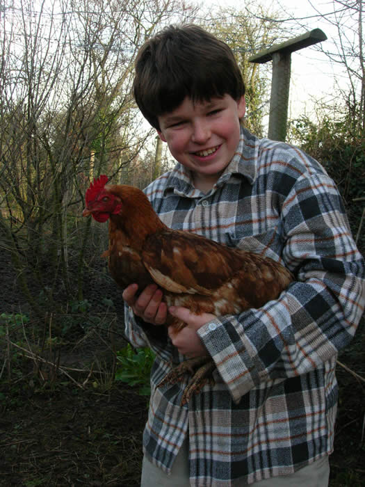 Yes you can even give a chicken a cuddle from time to time!