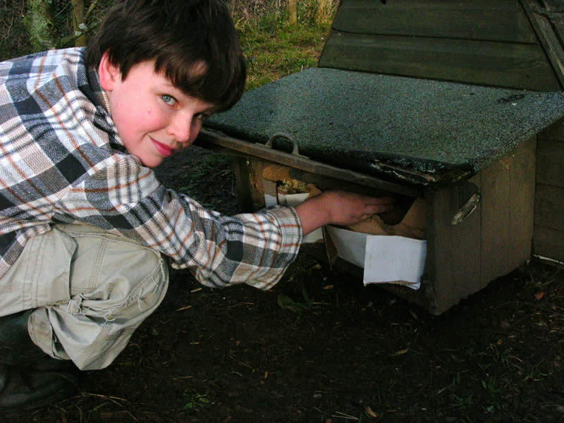 Gathering eggs in the free range chicken area will be an important experience for the school children.