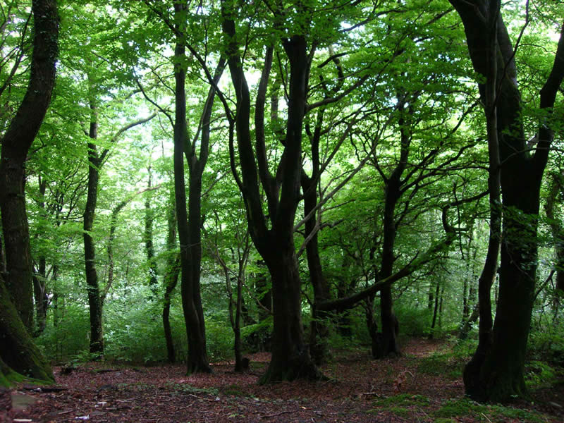 The woodlands to the north of Edwardsville Primary School, can be used for a variety of woodcraft activities including; school plays, imaginative dress up games, geological surveys, minibeast hunts, foraging, historical and archaeological studies, contemplative activities, quiet spaces for counselling and pastoral care.
