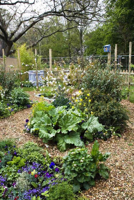 A vast array of edible perennial plants arranged for both aesthetic appeal and easy access.
